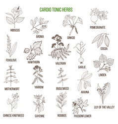 Best herbs for cardio tonic vector