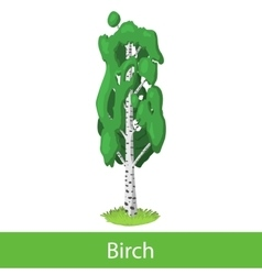 Birch cartoon tree vector