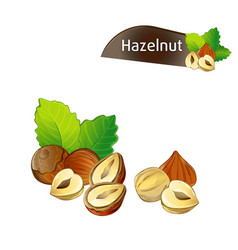 Hazelnut kernel with green leaves set vector