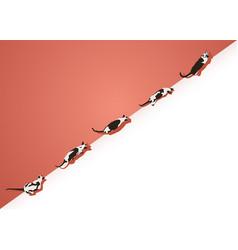 Siamese cat template design diagonal composite vector