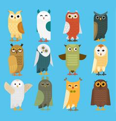 owls cartoon cute bird set owlet character vector image