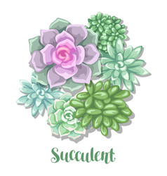 card with succulents echeveria jade plant and vector image