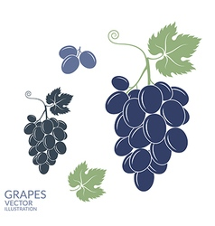 Grapes Isolated fruit on white background vector image