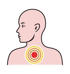 Male human anatomy vector