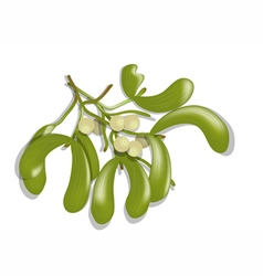 Mistletoe on white vector