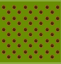 sunflower wallpaper on white background vector image