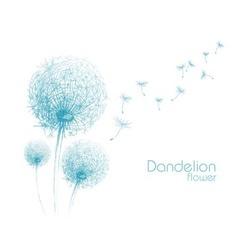 flower dandelion sketch vector image