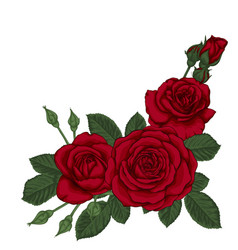 beautiful bouquet with three red roses and leaves vector image