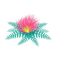 centaurea tropical flower vector image