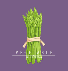 hand drawn asparagus vector image
