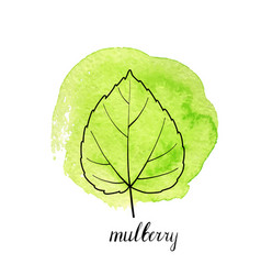 leaf of mulberry tree vector image