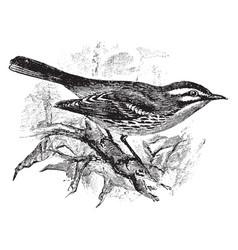 Prairie warbler vintage vector