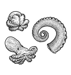 octopus and tentacle drawing engrav vector image vector image