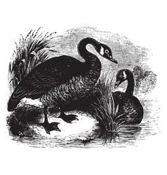 Canada goose vintage vector