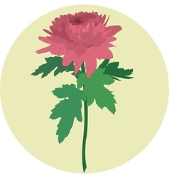 Pink chrysanthemum in a yellow circle vector image