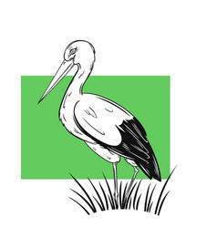 white stork hand drawn vector image