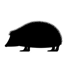 black silhouette hedgehog vector image