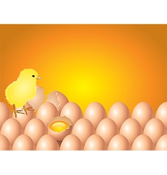 chicken eggs background vector image