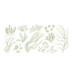 Collection monochrome edible algae isolated on vector
