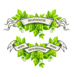 fresh hop plants with green vector image