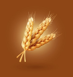 Realistic ear of wheat vector