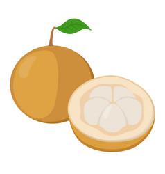 Santol krathon tropical fruit exotic nutrition vector