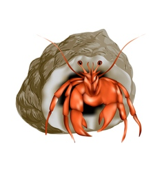 Hermit crab isolated vector