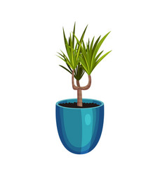 House plant growing in pot isolated on white vector