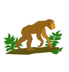 Monkey in green tree vector