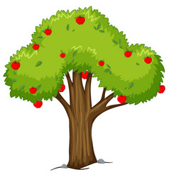 Apple tree with red apples vector