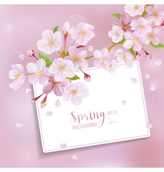 Cherry Blossom Spring Background - with Card vector