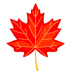 Colorful cartoon red maple leaf vector