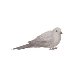 Flat icon of sitting dove bird with small vector