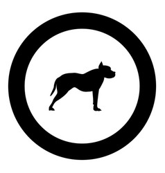 pit bull terrier icon black color in round circle vector image