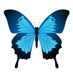butterfly blue vector image vector image