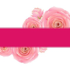 Pink Rose Banner vector image vector image