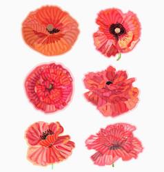 poppy watercolor floral floral decorative element vector image