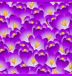 Purple crocus flower seamless background vector