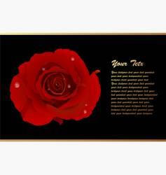 romantic card with red rose vector image