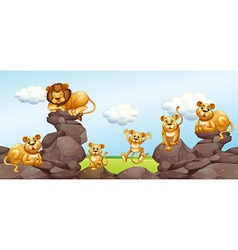 Lion family in the field vector image vector image