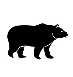 bear isolated on white vector image