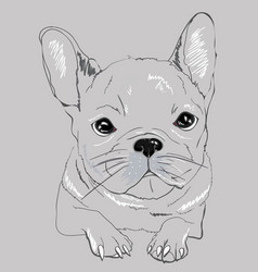 Cute black white french bulldog for t shirt vector