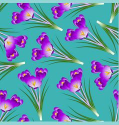 Purple crocus flower on green teal background vector
