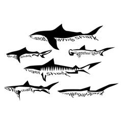 shark species vector image vector image