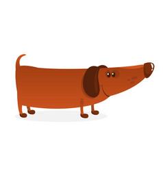 Cartoon funny dachshund dog vector
