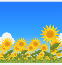 landscape with sunflower vector image