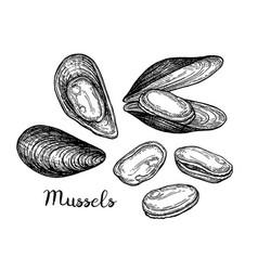 Mussels ink sketch vector