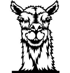 Peeking lama - funny farm animals out vector