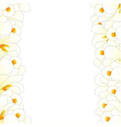 white crocus flower border vector image