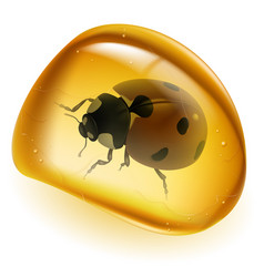 amber and beetle on white background for design vector image